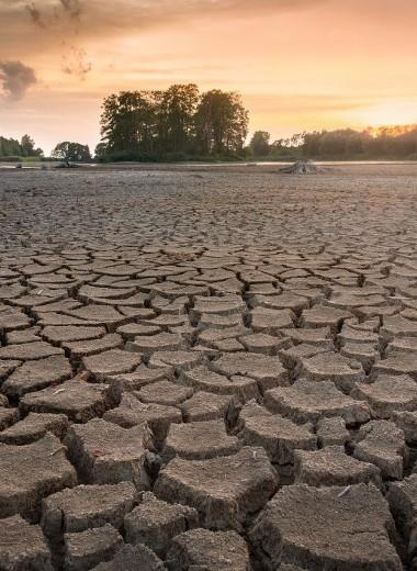 Древесные кольца указали на самые разрушительные засухи в Южной Америке за последние 600 лет