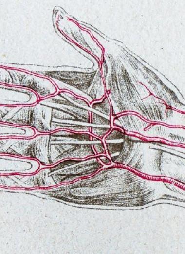 Почти треть современных людей обладает дополнительной артерией