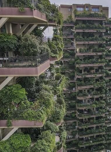 Комплекс зеленых небоскребов в Китае казался экологическим раем. Комары превратили его в ад