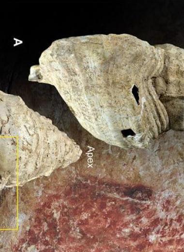 Древнейший духовой инструмент из раковины протрубил впервые за 18000 лет