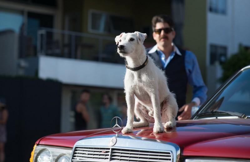 7 привычек собак и что они означают