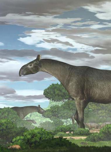 Безрогий носорог: как выглядело одно из крупнейших наземных млекопитающих в истории