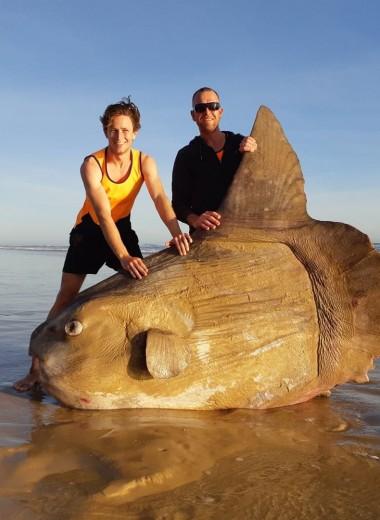 На австралийском пляже нашли луна-рыбу. Люди поначалу подумали, что это розыгрыш