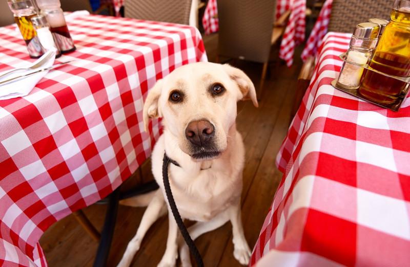 Как сходить в кафе с собакой, чтобы в твоем счете не было разбитой посуды и покусанных посетителей