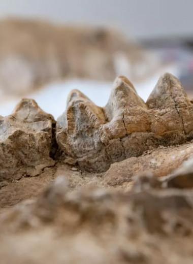 В предгорьях Калифорнии прятался окаменелый сад древних зверей