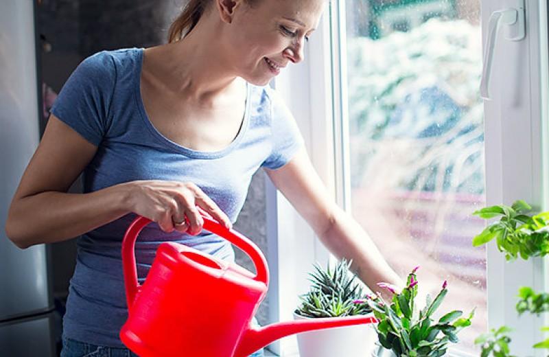 Напои флору: как поливать комнатные цветы