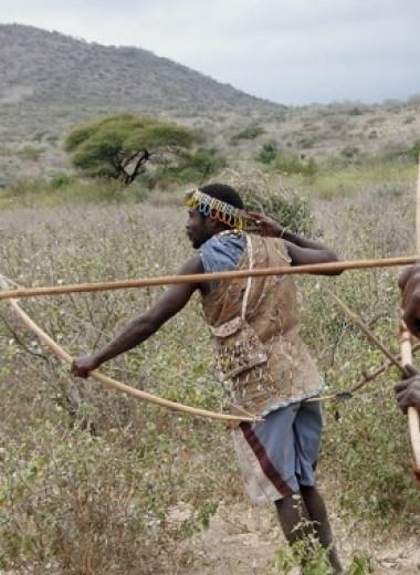 Как живет племя хадза, у которого нет болезней сердца и рака кишечника