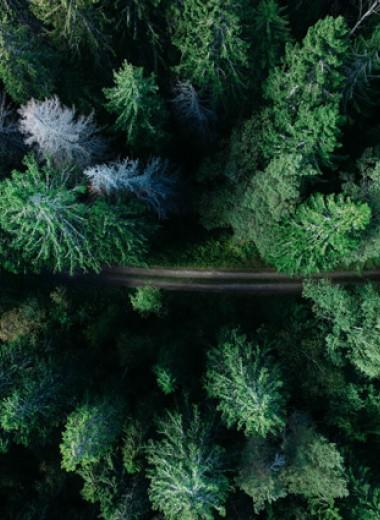 Стина Джексон: Серебряная дорога