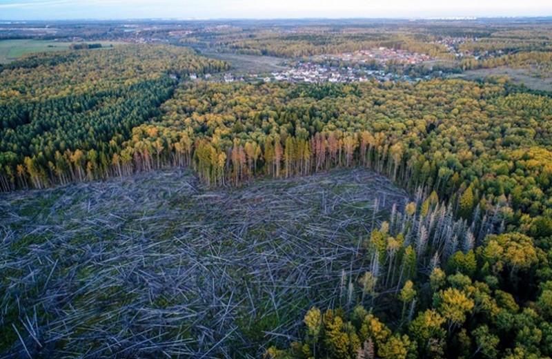 Что творится в российском лесу