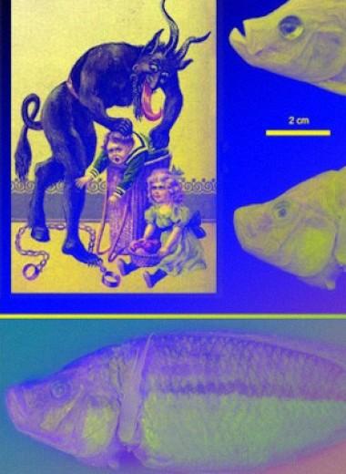 Новую рыбу-педофага назвали в честь рождественского духа Крампуса