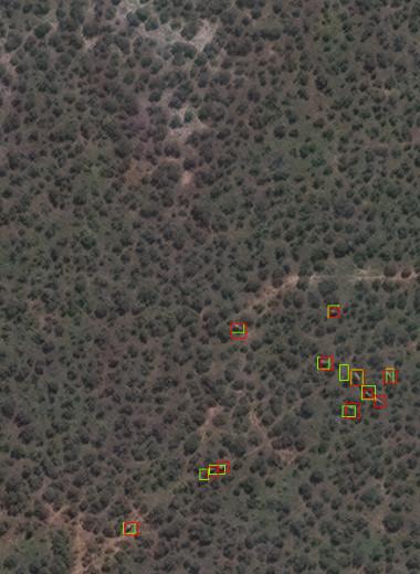 Африканских слонов посчитали со спутника с помощью ИИ