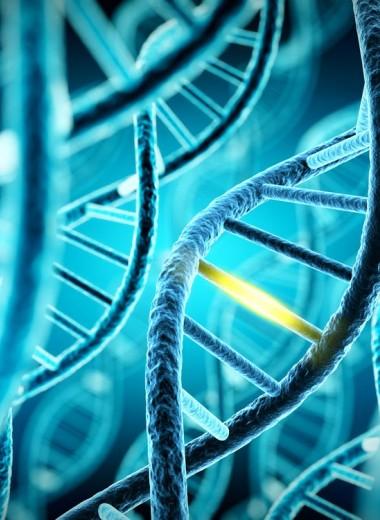 7 мифов о ГМО