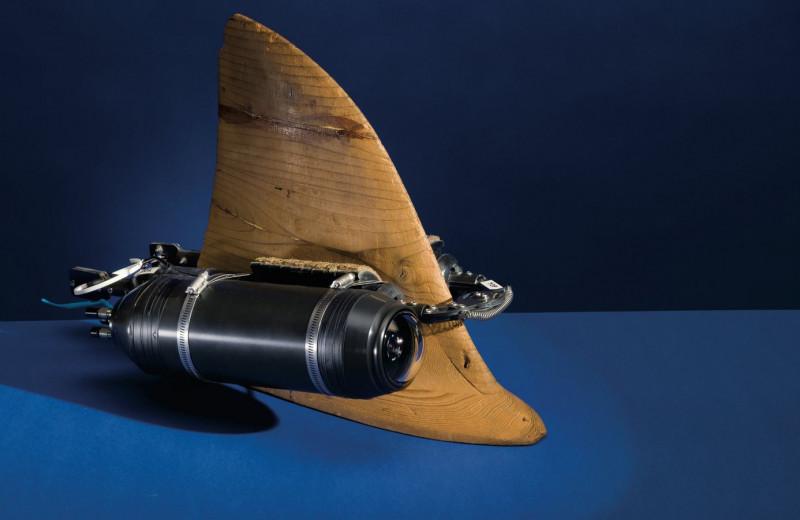 Взглянуть на мир глазами акулы: что такое криттеркам