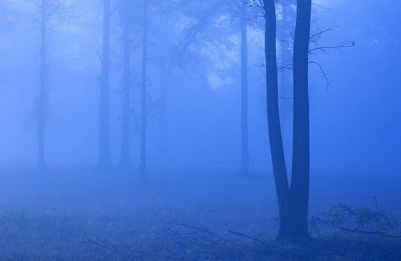 Сны о смерти: почему они иногда сбываются?