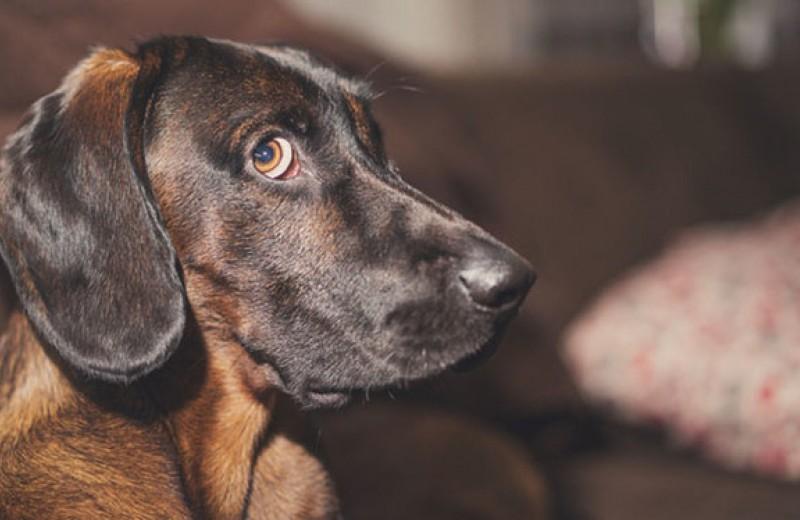 Сверхспособности вашей собаки: 7 научных фактов