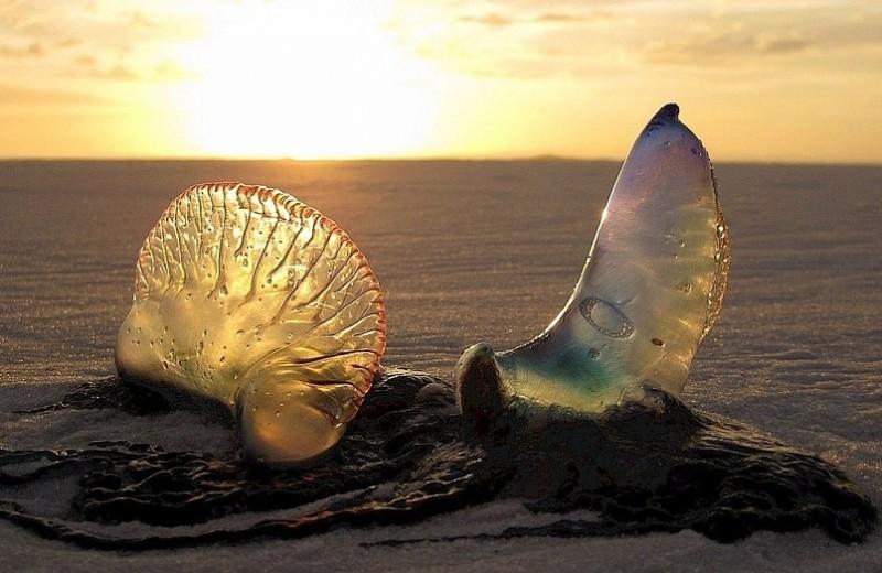 Вооружена и опасна: что делать при ожоге медузы