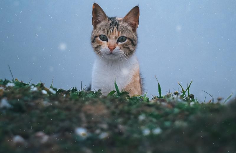 Карантин не помеха: кошка преодолела 7 тысяч километров ради встречи с хозяйкой