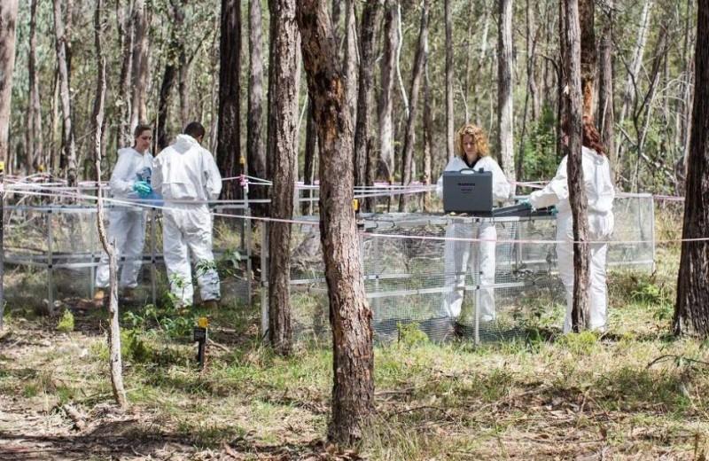 Трупы могут шевелиться: неожиданное открытие сделано в Австралии