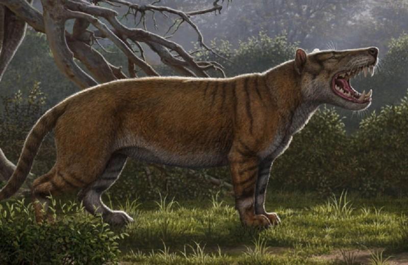 Зубами щёлк: обнаружены останки нового вида древних хищников