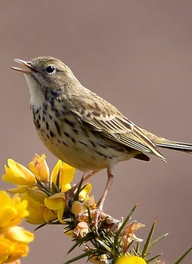 Редкие птицы Великобритании не захотели жить рядом с дорогами