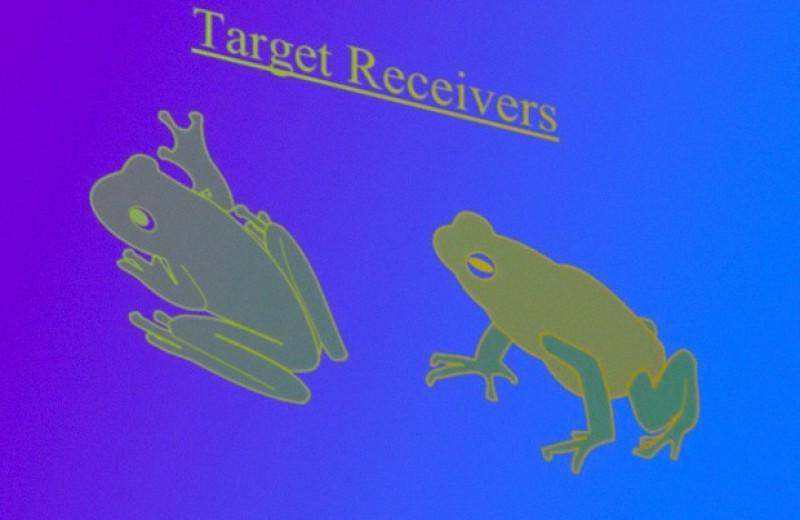Древесные лягушки обманули хищников хоровым пением