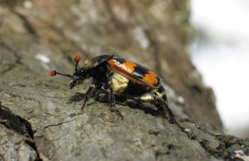 Почему жуки бывают гомосексуалистами