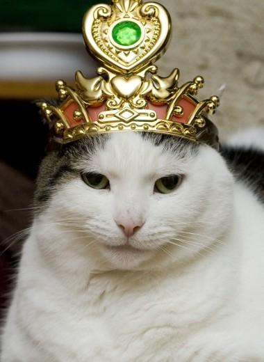 Почему в средневековой Византии любили кошек, а в Европе яростно уничтожали