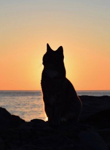 Кошачий заповедник на греческом острове ищет нового сотрудника