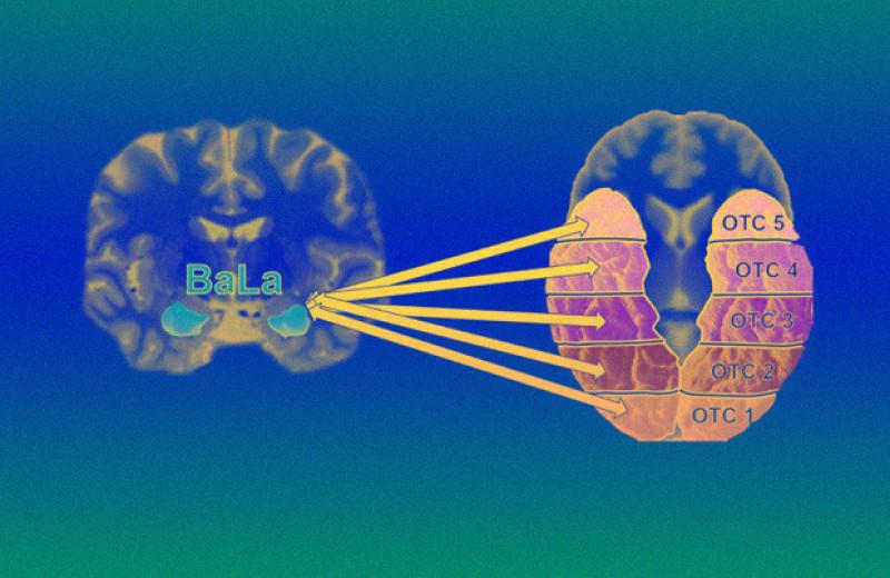 Мозг новорожденных оказался эмоционально неспецифичным