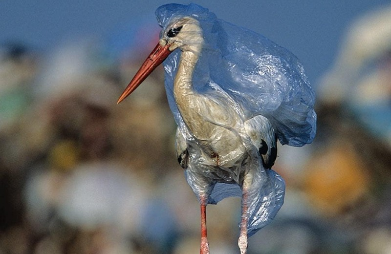 В очередном индийском штате запретили пластик