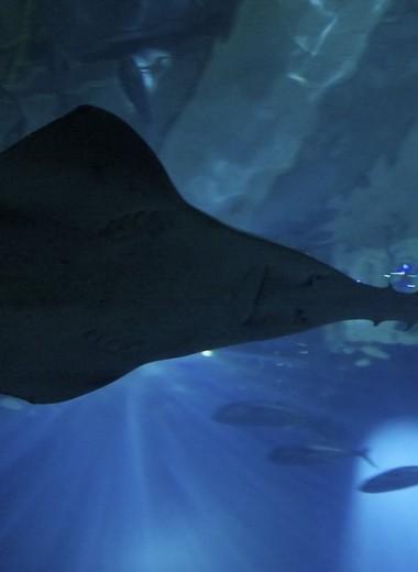 Как рыбе-меч удается развивать бешеную скорость