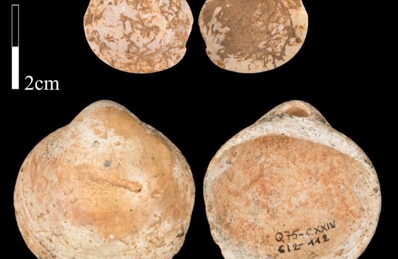 Древнейшая мода: когда ракушки стали популярным украшением?