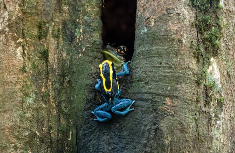 Тропические ядовитые лягушки поставили биологов в тупик