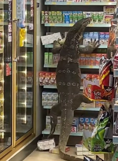 Огромный варан устроил переполох в тайском супермаркете: видео