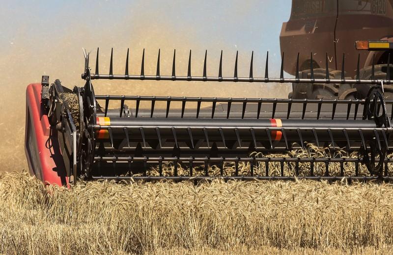 Мировая житница: доходы России от экспорта зерна увеличились на 40%