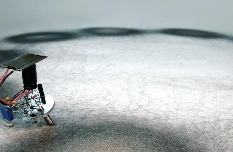 Дэвид Боуэн: художник, который рисует... мухами