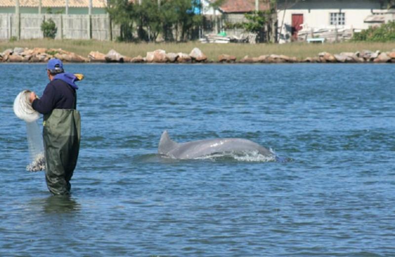 Дельфины помогают людям ловить рыбу: видео