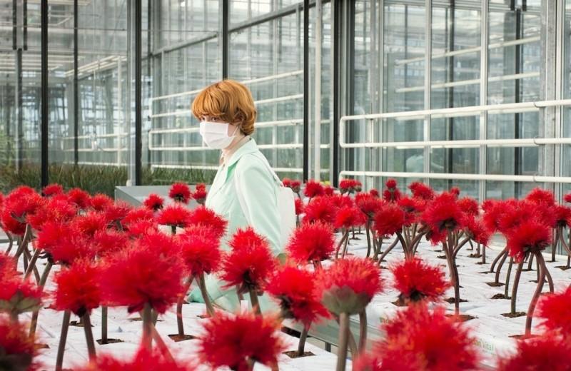 Фильм, в котором главным злодеем оказывается цветок, вы еще не видели