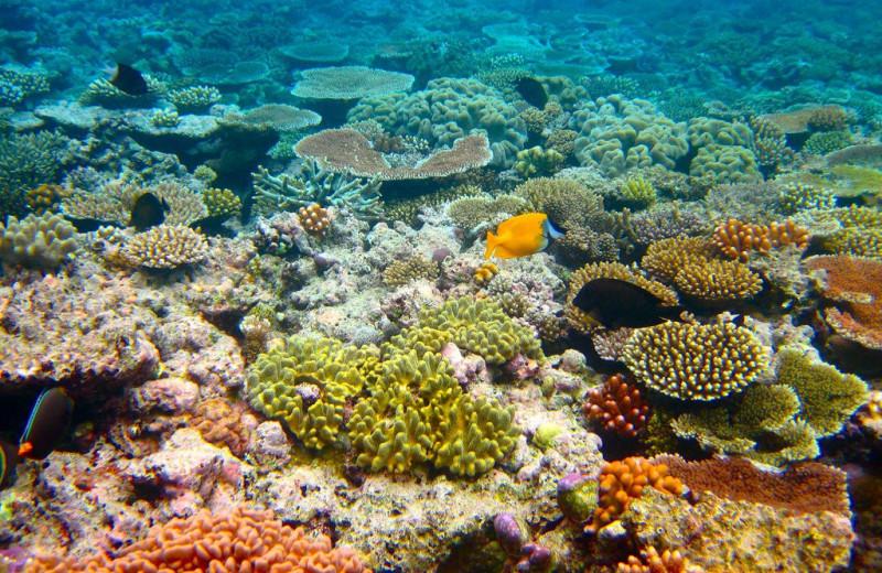 В Тихом океане насчитали 500 миллиардов кораллов