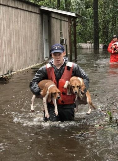 Как спасают животных во время урагана «Флоренс»: видео