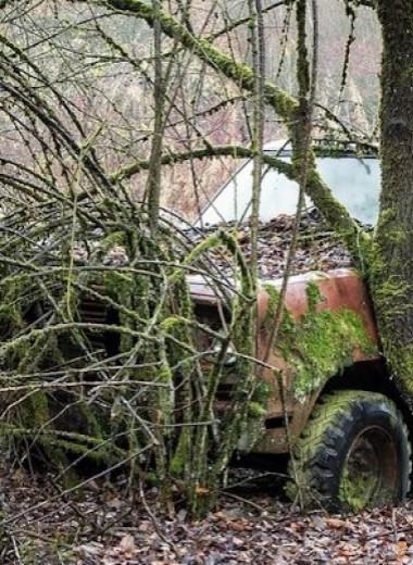 Багажник на несколько дней задержал колонизацию трупа мясными мухами