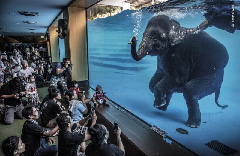 Победители Wildlife Photographer of the Year-2021: очень красивая фотогалерея