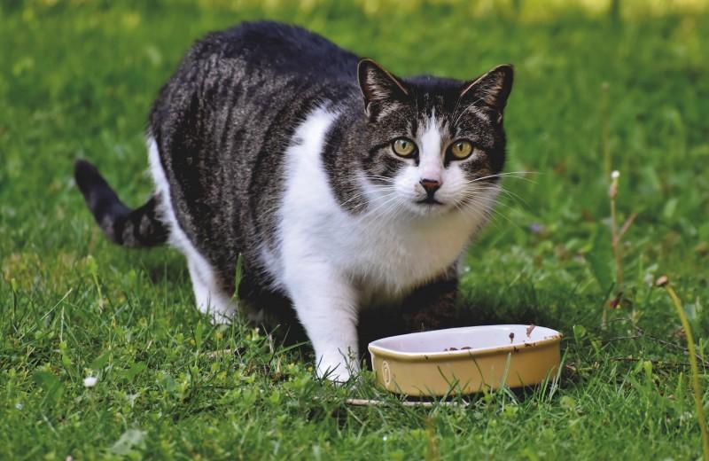 Семь популярных кошачьих «странностей» с точки зрения науки