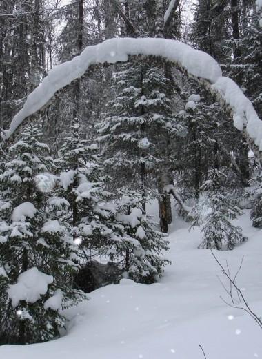 В Архангельской области создали заказник для защиты исчезающей тайги