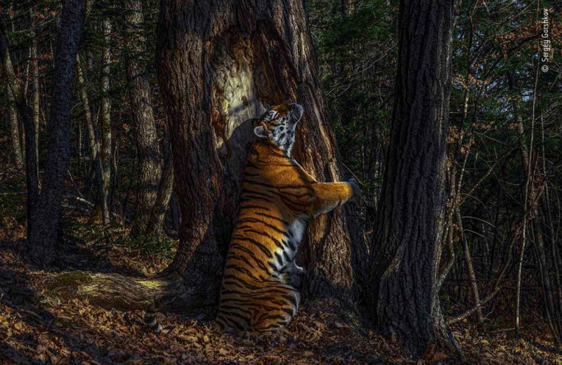 «Фотографом года вдикой природе» впервые стал россиянин