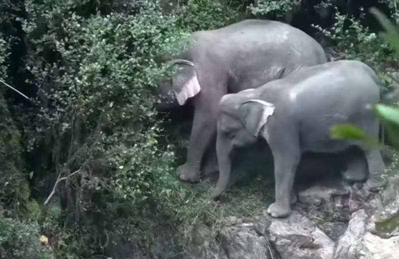 «Адская пропасть» в Таиланде погубила шесть слонов