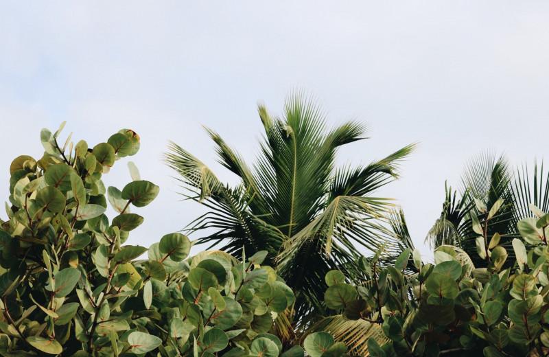 Слышат ли нас растения