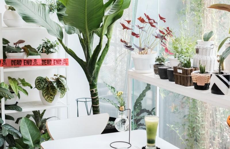 Комнатные растения, которые действительно очищают воздух