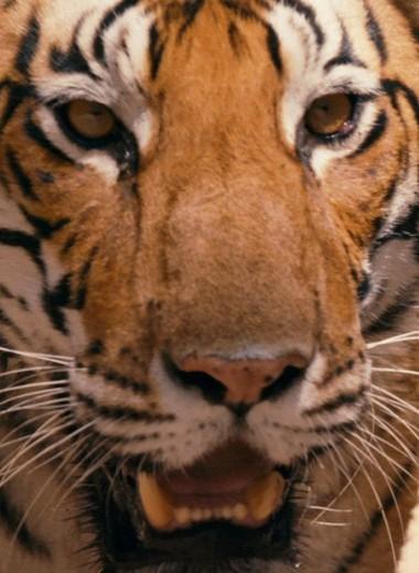 «Мы все разрушим». Эксперт WWF Павел Фоменко о том, зачем нужна зоозащита