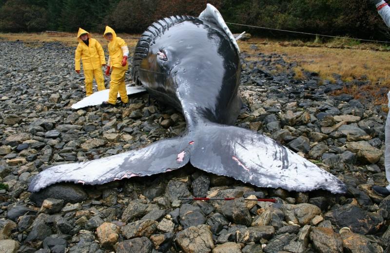 #пронауку: сколько животных вымерли за последние 10 лет